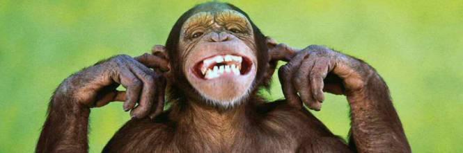 1473231766-scimmia